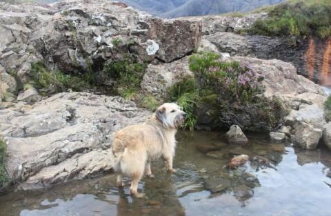 Mit Boerne bei den Fairy Pools – Isle of Skye