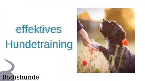 effektives Hundetraining – Wie du auch große Ziele mit deinem Hund erreichst
