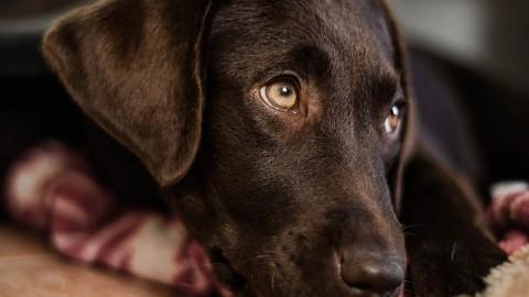 OCD der Schulter – 2 Übungen, die deinem Hund helfen