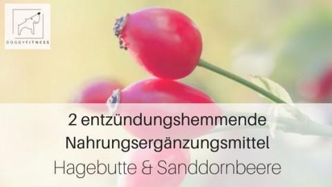 2 entzündungshemmende Nahrungsergänzungsmittel – Hagebutte & Sanddornbeere