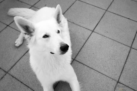 Warum ein Hund Geld kostet.