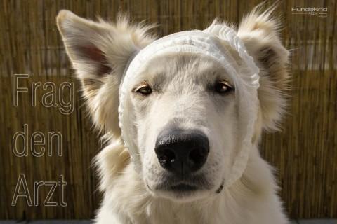 Auf leisen Sohlen kommt die Hundepfote angelaufen.