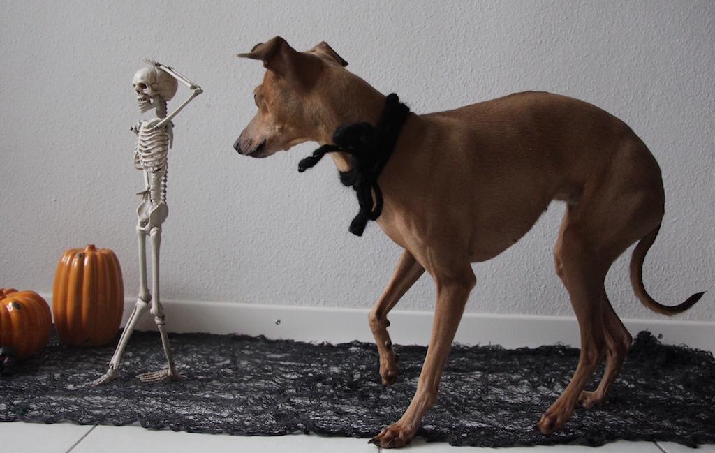 Halloween Monatspfoto Hundeblog miDoggy