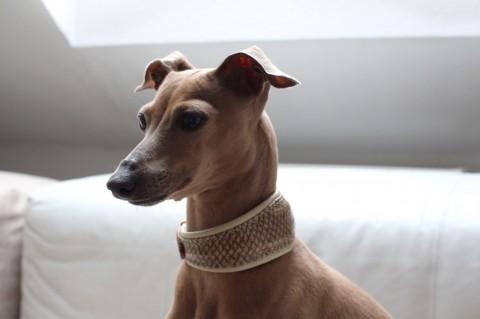 Lola's Lachshalsband