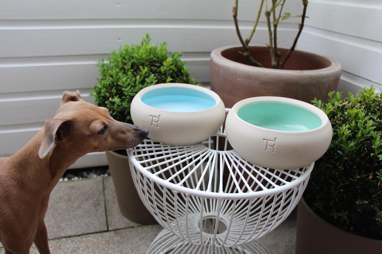 Mint Keramiknapf von Treusinn - Hundeblog miDoggy 3