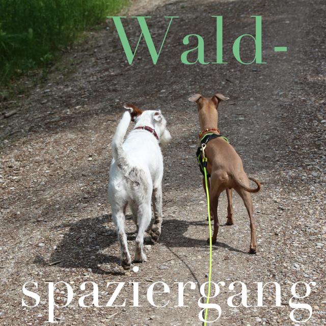 Spaziergang im Wald mit Hunde - Hundeblog miDoggy