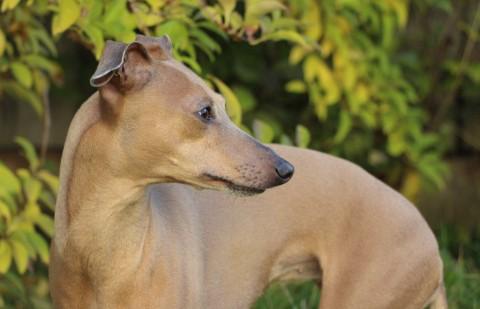Die 8 besten Blogbeiträge für einen goldenen Herbst mit Hund