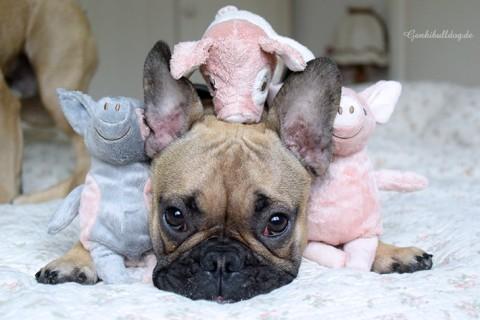 Große Schweinerei