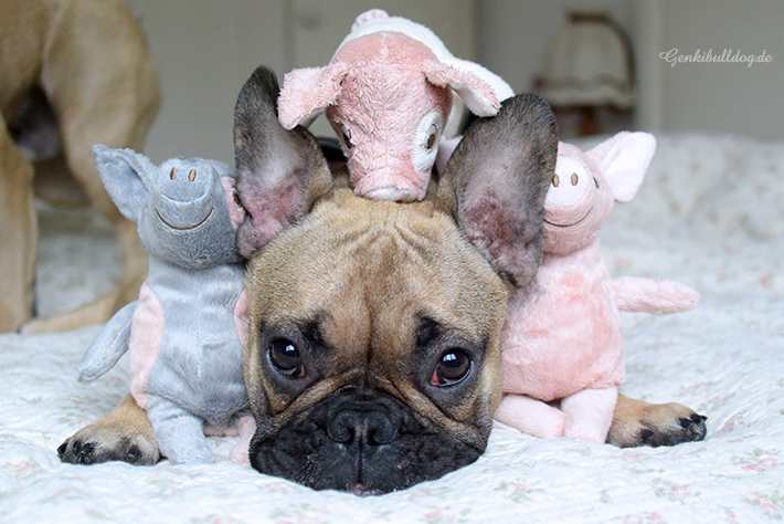 IKEA Schweinchen für Hunde