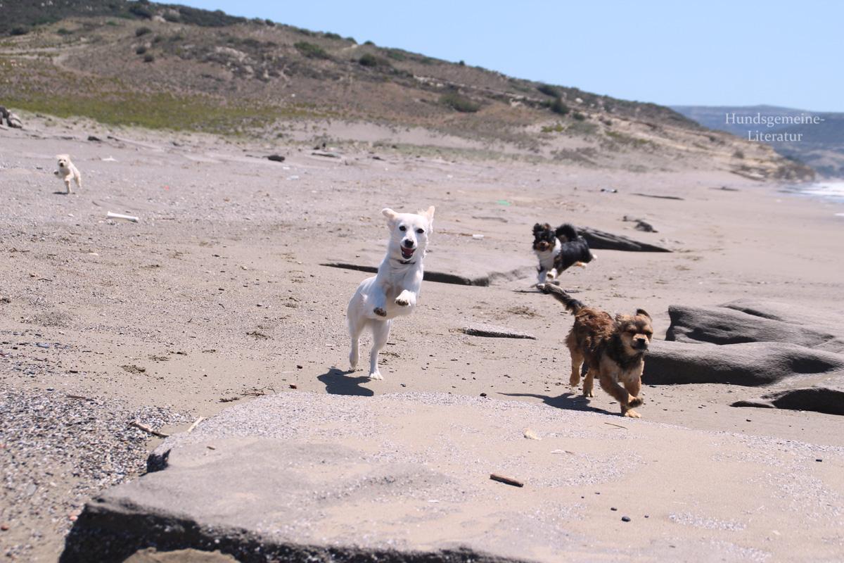 Hunde Griechenland