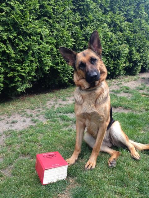 Die Haftung eines Hundeshalters
