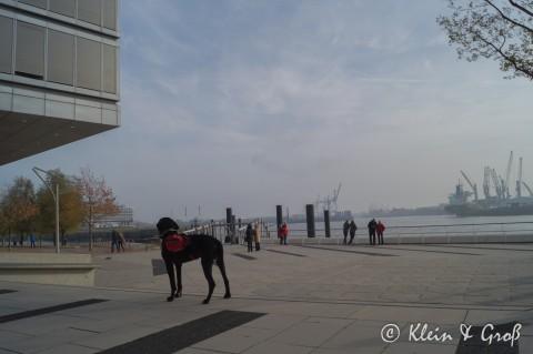 [Dogge on Tour – Unterwegs in Hamburg]