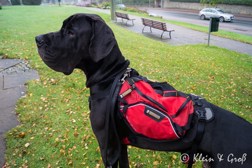 Rucksack für den Hund