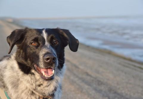 Isarhund goes Nordsee: Lange Fahrt, ruhiger Start – #texel4dogs
