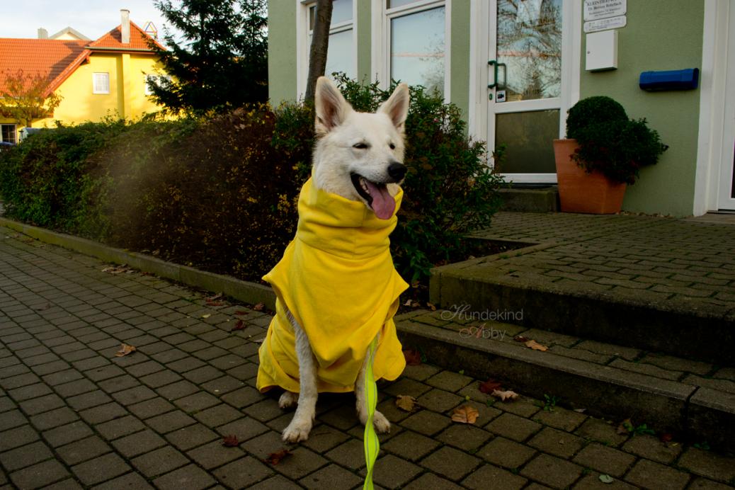 Test Bademantel Hund