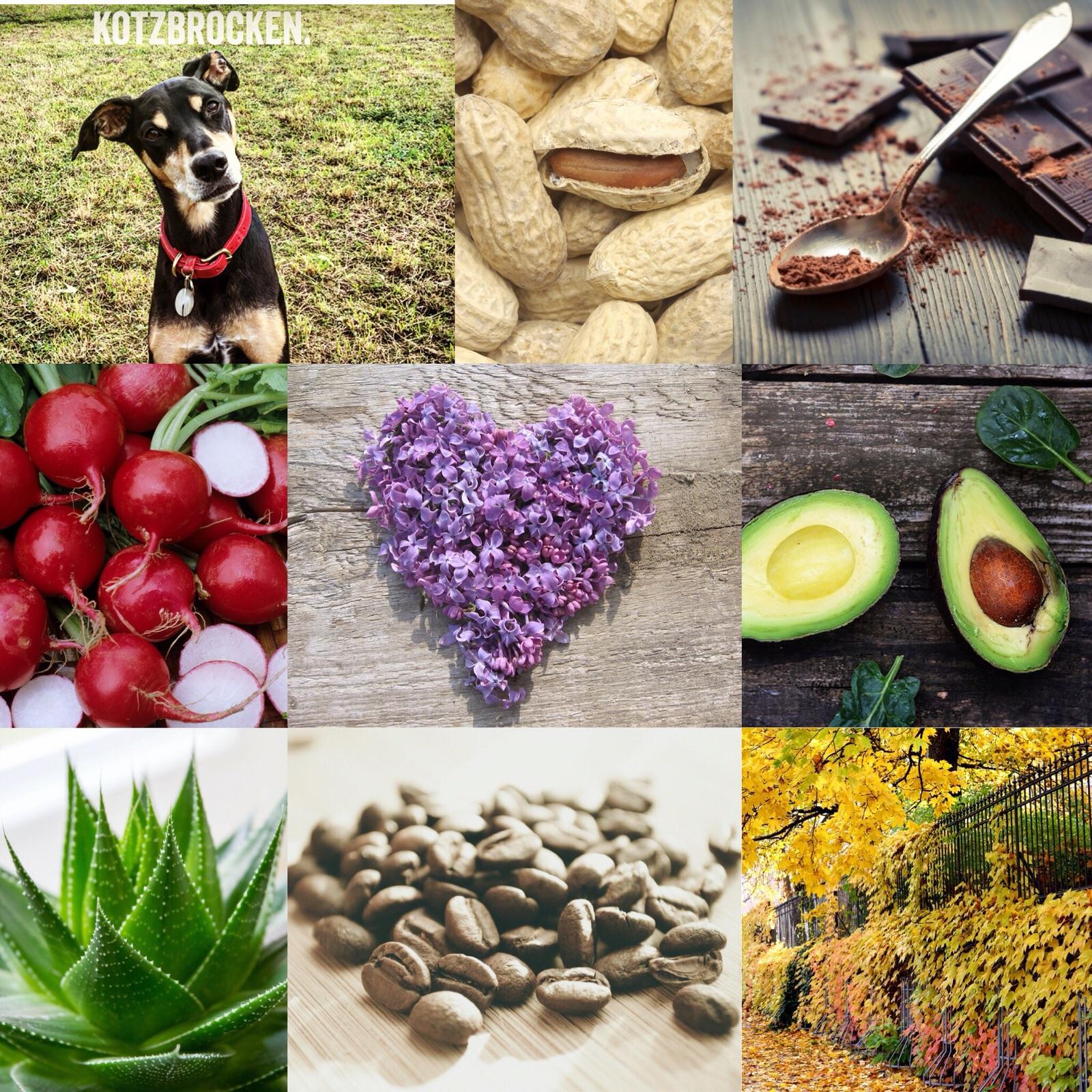 Giftige Pflanzen und Nahrungsmittel Hund