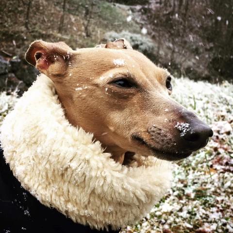 [Lola liebt Hundemäntel] Der Winterliche