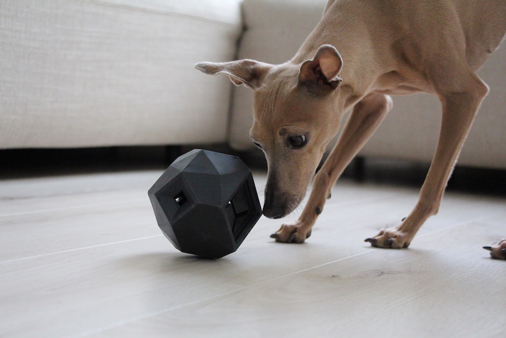 Leckerli Ball The Odin Hundeblog miDoggy 0331
