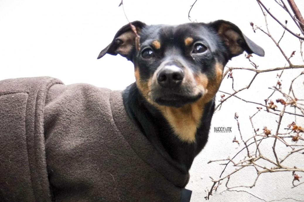Warm up cape Hund