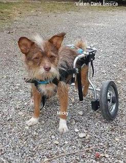 Behinderung Hund