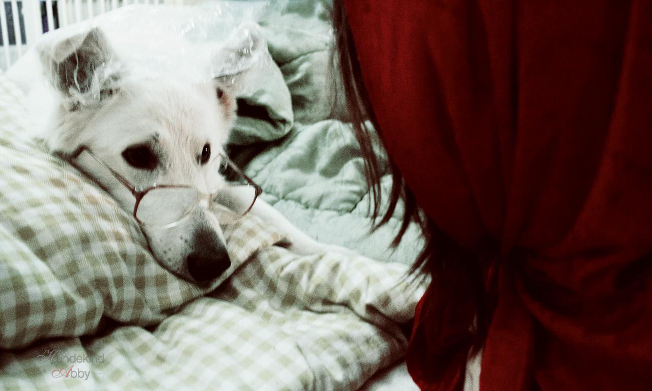 Rotkäppchen Hund