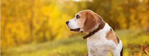 Nicht vom alten Eisen – ein Plädoyer für die Aufnahme eines älteren Hundes