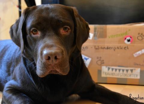 Das DogBlogger Wanderpaket ist da!