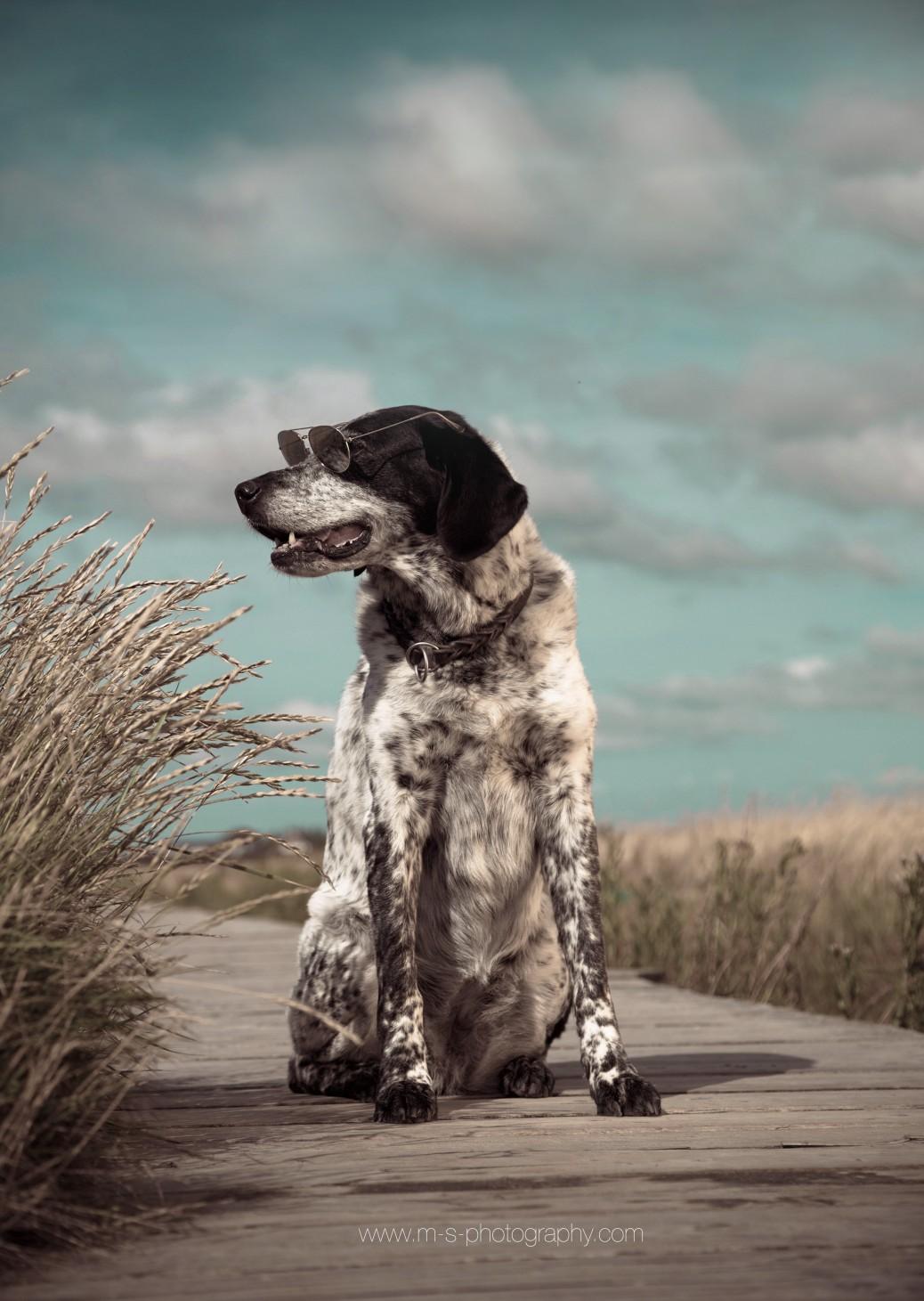 Hund am Steg
