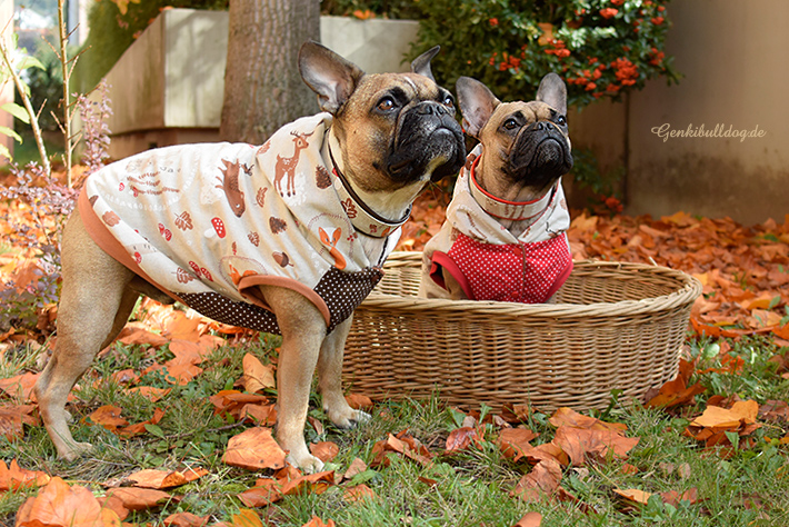 selbstgemachte Hundemantel Französische Bulldogge