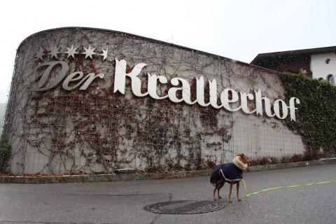 [Urlaub mit Hund] Der Krallerhof in Leogang
