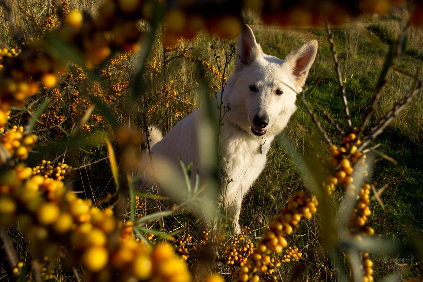 Hundekind Abby