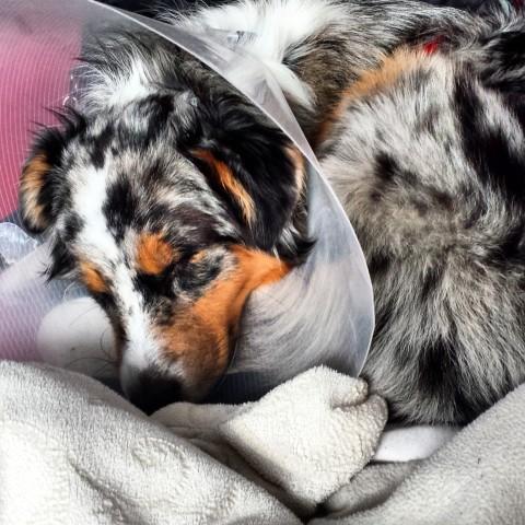 Bella ist eine schwierige Patientin.