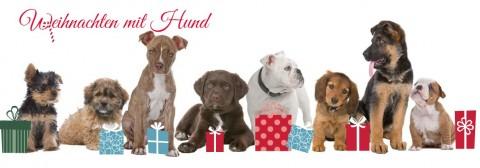 Beitragsreihe: Weihnachten mit Hund – darauf solltet ihr achten!