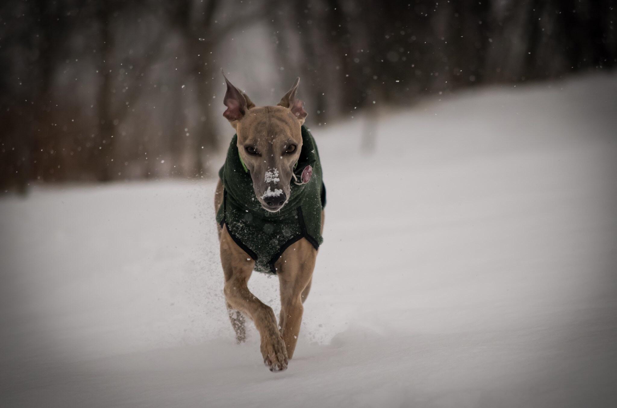 Weihnachtsgeschichte Alistair Hundeblog miDoggy