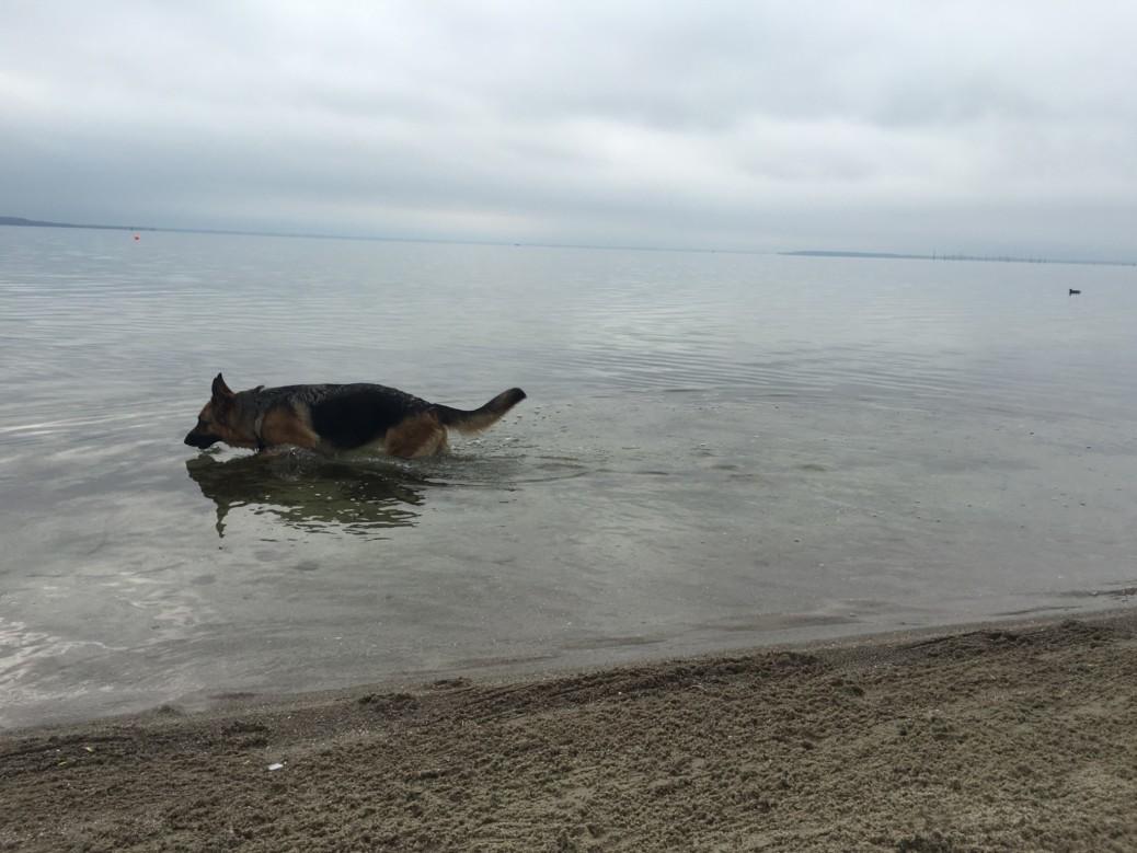 Hund und Urlaub