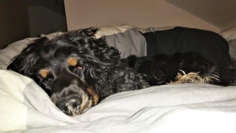 [Blogparade] Hund im Bett – Ja oder Nein?….