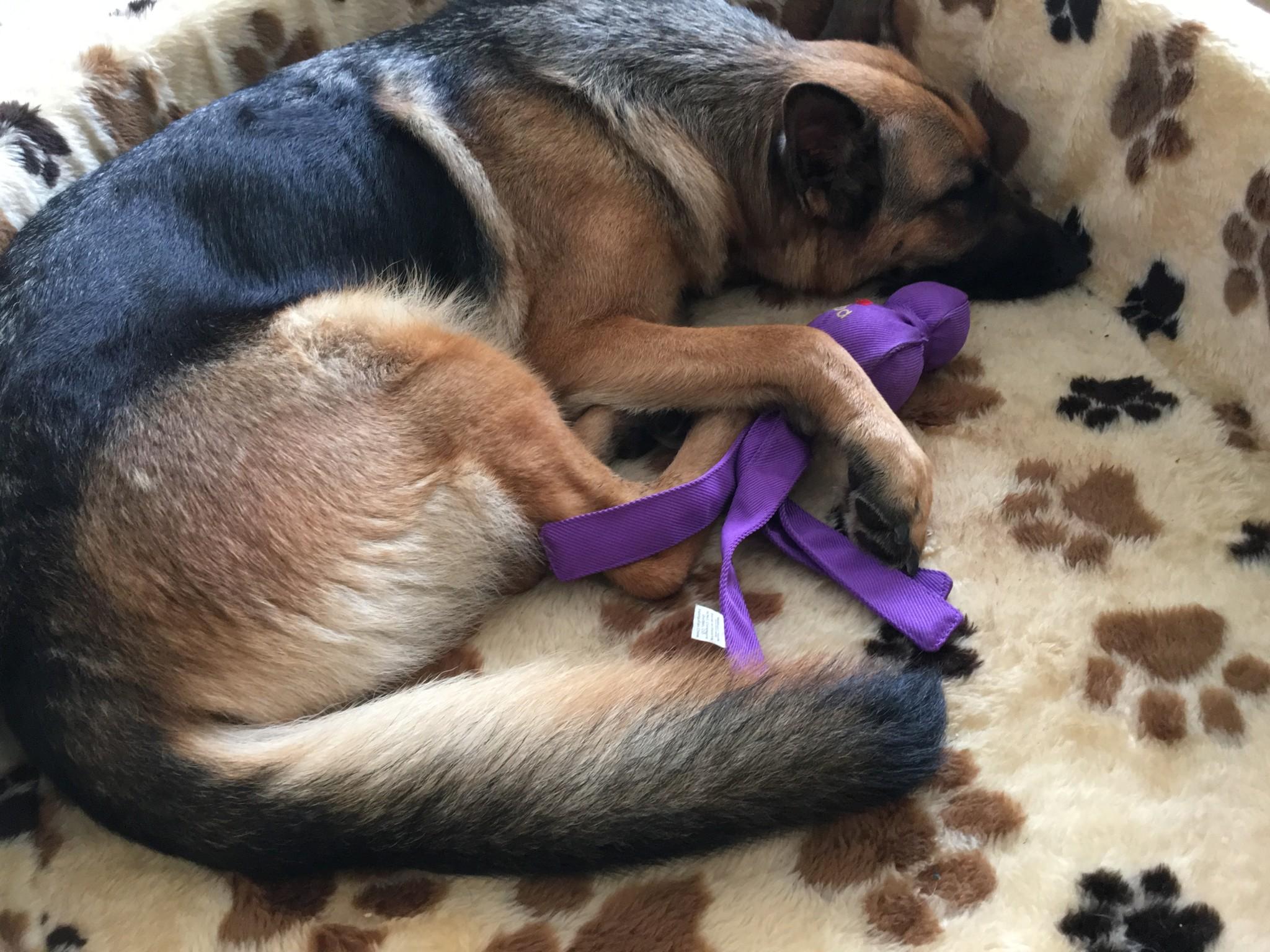 Schlafposition Bedeutung Hund