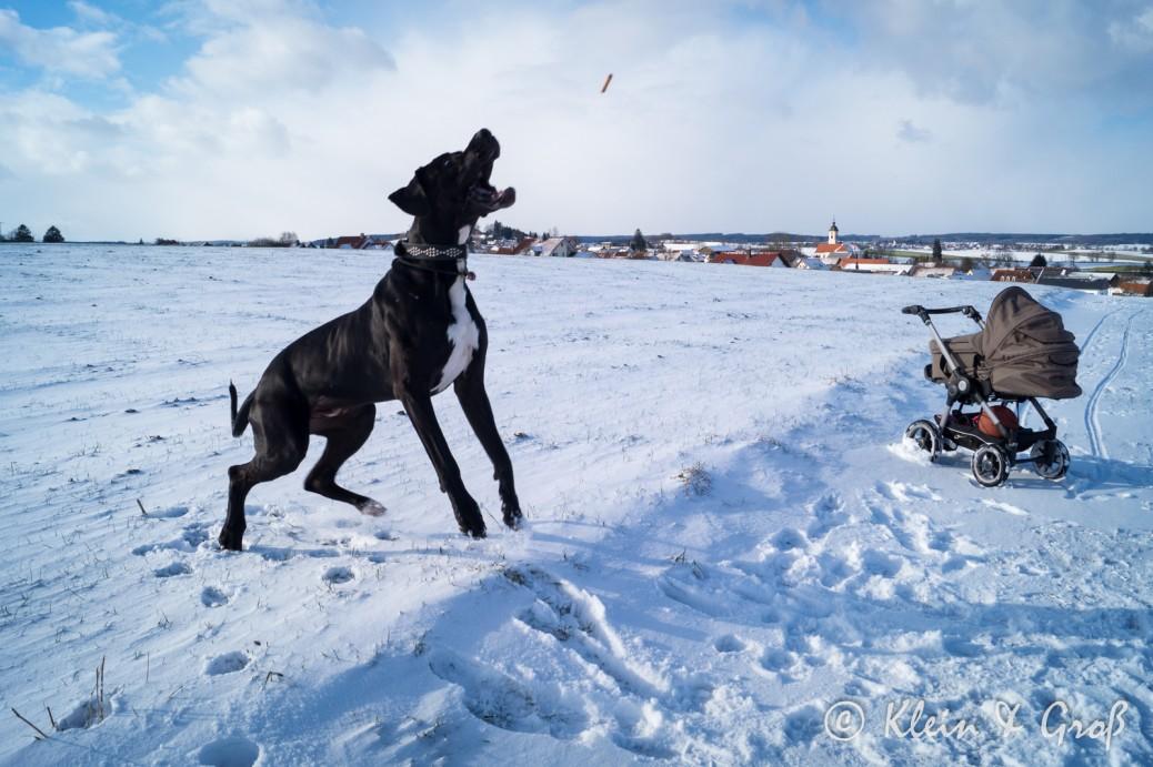 Schneespaß Dogge