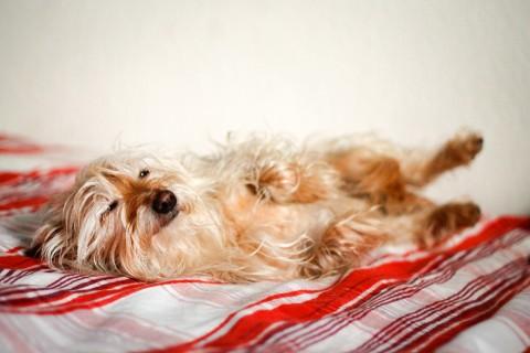 Das Leid der Fotografenhunde – wie man sie bei Laune hält