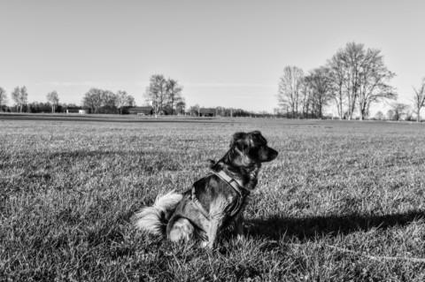 Der Hund, der Hundehalter und die Hundesteuer