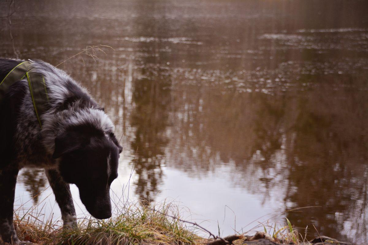 Ausflug mit Hund