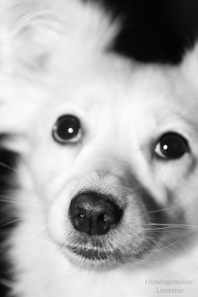 Hundsgemeine Literatur
