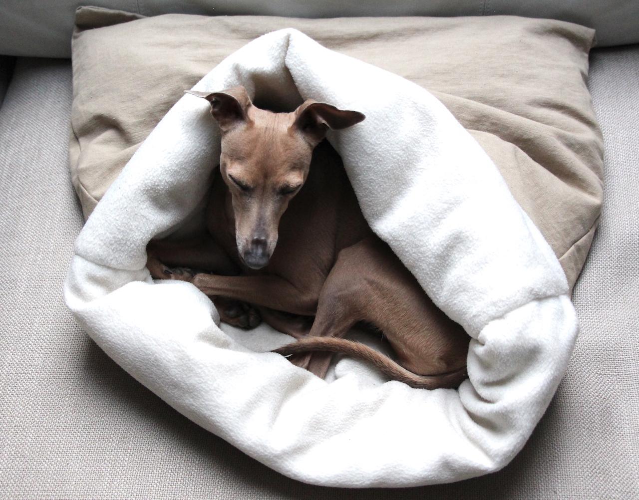 Monatspfoto Gemütlichkeit Hundeblog miDoggy