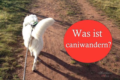 Was ist Caniwandern?