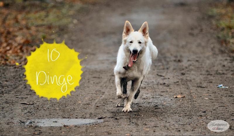 10 Dinge die ein Hund nie sagen würde