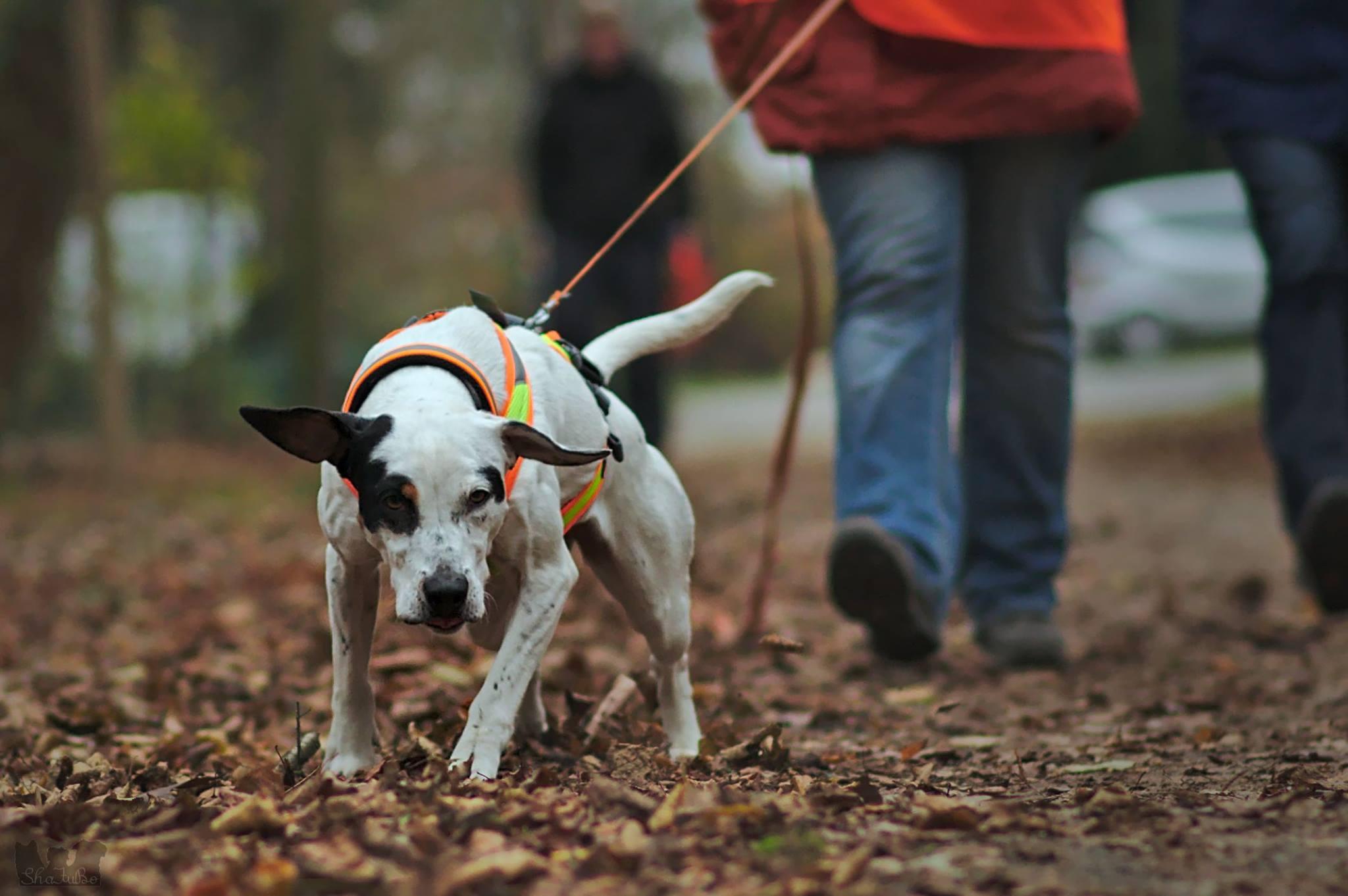 Auslastung nach Hunderasse