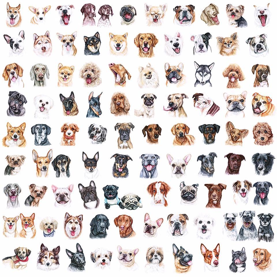 Hunde Illustrationen lustig