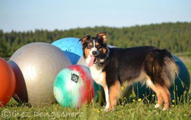 Treibball Hundesport Hundeblog miDoggy