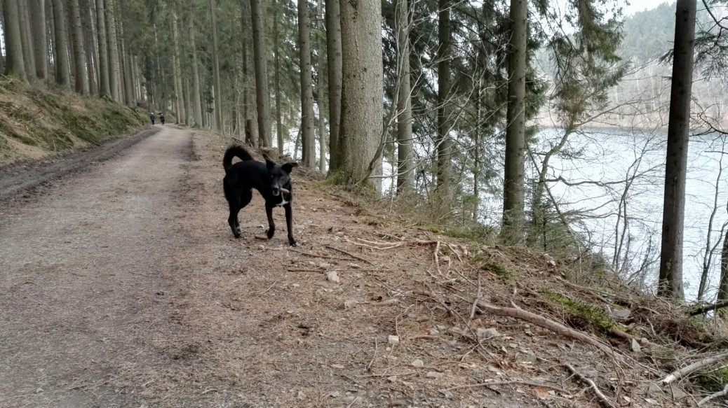 Aggertalsperre Hund Ausflug DreiPunkteCharlie