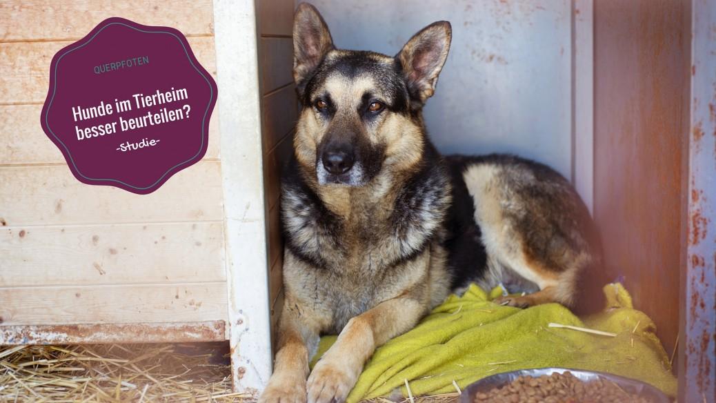 Hunde im Tierheim Beurteilung Pfotenpflege